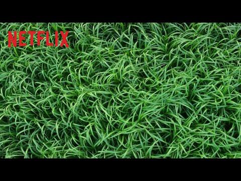 Im hohen Gras | Offizieller Trailer | Netflix