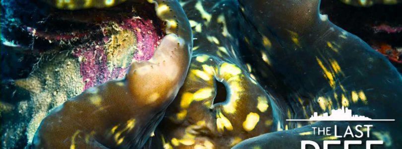 "Ab heute erhältlich: IMAX-Doku ""The Last Reef"" mit Dolby-Atmos-Ton"