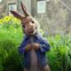 """Peter Hase"": Laut Amazon auch auf 4K-Blu-ray"