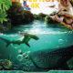 """Nature – Unsere Natur in 4K"": Studio Hamburg bringt Doku auf 4K-Blu-ray"
