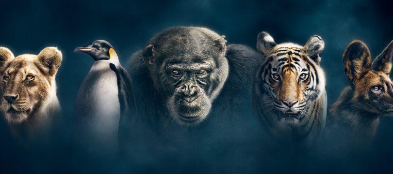"""""""Wilde Dynastien"""": BBC-Dokuserie auch hierzulande auf (4K-)Blu-ray – aber ohne Atmos-Ton (Update)"""