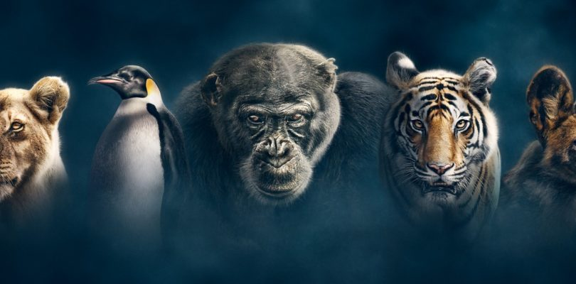 """Dynasties"": Tierdoku-Serie mit Atmos-Ton auf Blu-ray und 4K-Blu-ray"