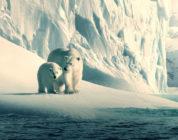 """""""Unser Planet"""": Netflix-Naturdoku mit deutschem und englischem Atmos-Ton sowie Dolby Vision"""