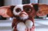 """""""Gremlins"""" und """"Shining"""" jetzt auch als gewöhnliche 4K-Blu-rays vorbestellbar"""