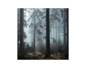 """""""Veneliti"""": Weitere Pure Audio Blu-ray mit Auro-3D- und Dolby-Atmos-Ton"""