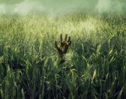 """""""Im Hohen Gras"""": Netflix bringt Horrorfilm mit Dolby Atmos und Dolby Vision"""