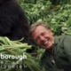 Netflix zeigt David-Attenborough-Doku in 4K/Dolby Vision mit Atmos-Ton