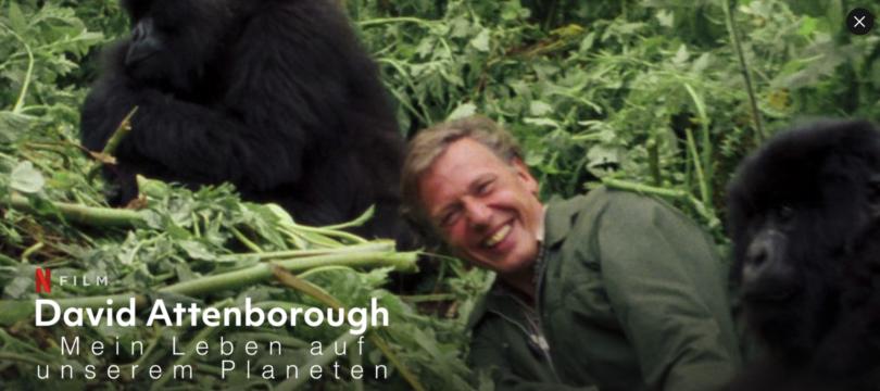 Netflix zeigt David-Attenborough-Doku in 4K/Dolby Vision mit Atmos-Ton